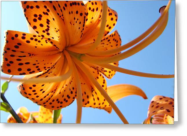 Lili Greeting Cards - OFFICE ARTWORK Tiger Lily Flowers Art Prints Baslee Troutman Greeting Card by Baslee Troutman