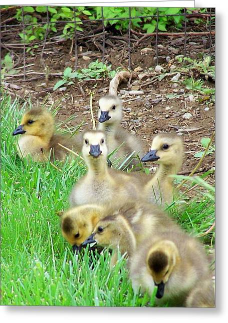 Ducklings Digital Greeting Cards - Oh Baby Greeting Card by Vijay Sharon Govender