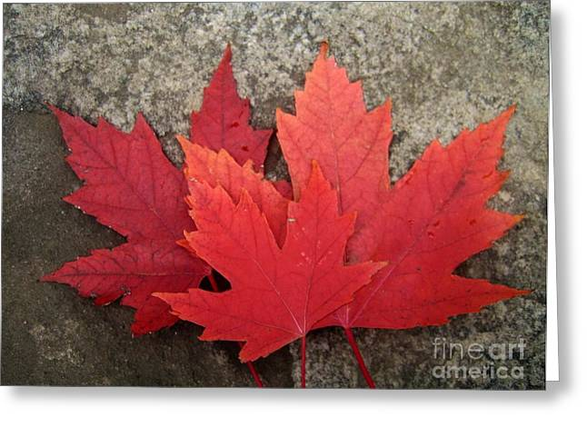 Canadian Greeting Cards - Oh Canada Greeting Card by Reb Frost