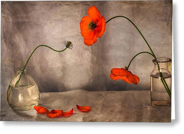 Glass Vase Photographs Greeting Cards - Oh Dear Greeting Card by Constance Fein Harding