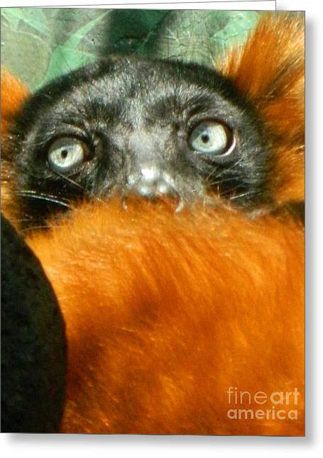 Red-ruffed Lemur Greeting Cards - Oh My What Big Eyes You Have Greeting Card by Emmy Marie Vickers
