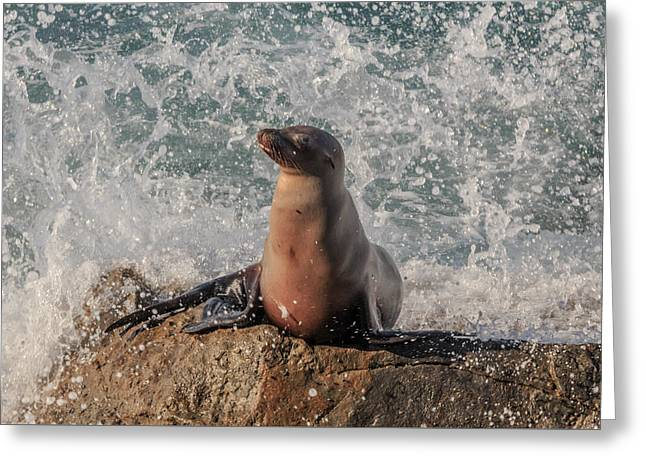 Ocean Mammals Greeting Cards - Oh No Greeting Card by Danny Goen