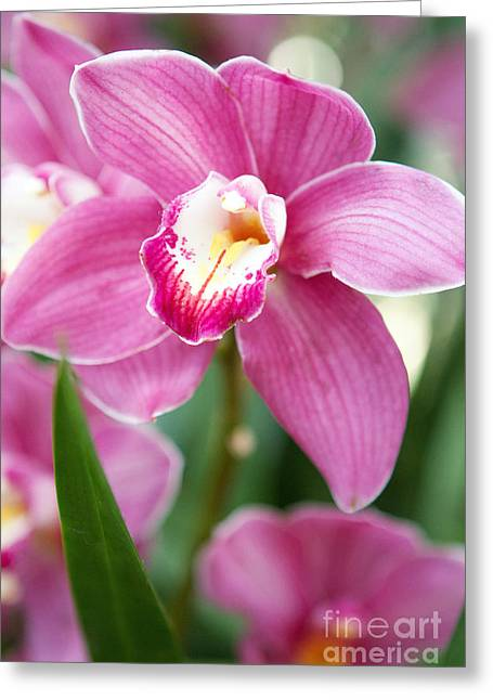 Oh So Orchid Greeting Card by A New Focus Photography