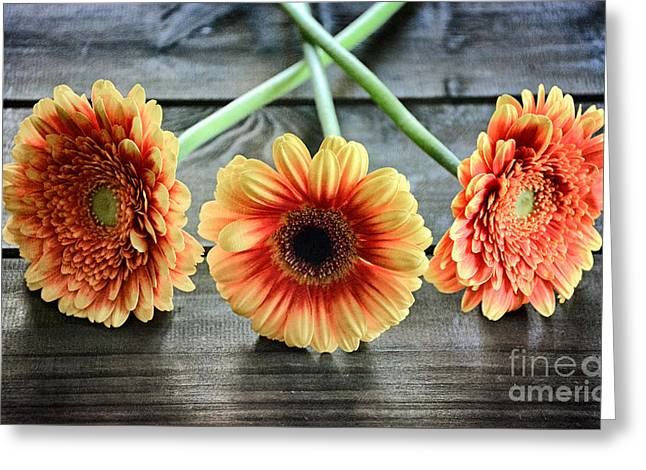 Flower Design Greeting Cards - oIo three gerberas oIo Greeting Card by SK Pfphotography