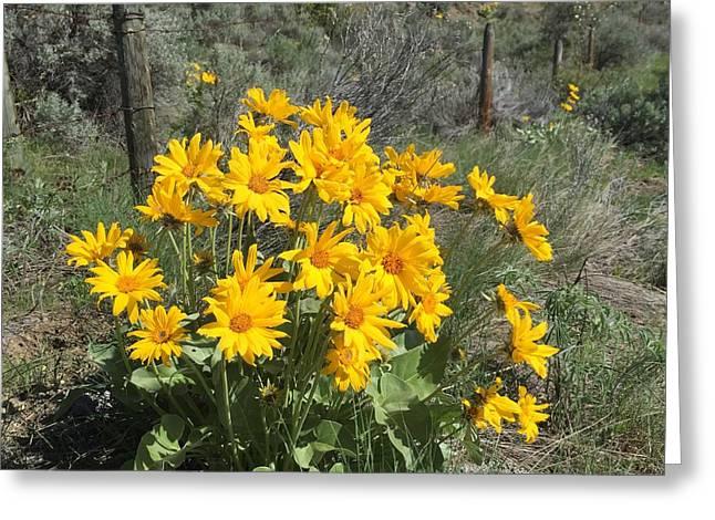 Okanagan Sunflower 1 Greeting Card by Stephen Viszlai