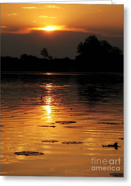 Best Sellers -  - Gloaming Greeting Cards - Okavango Delta Sunset Greeting Card by Maria Adelaide Silva