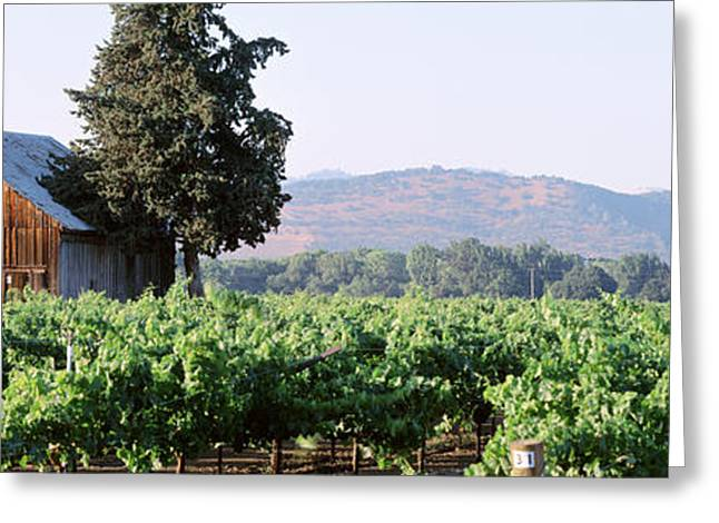 Old Barns Greeting Cards - Old Barn In A Vineyard, Napa Valley Greeting Card by Panoramic Images