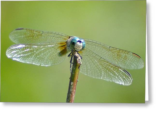 Dragonfly Macro Greeting Cards - Old Blue Eyes - Blue Dragonfly Greeting Card by Bill Cannon
