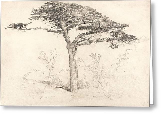 Old Cedar Tree In Botanic Garden, Chelsea Greeting Card by Samuel Palmer