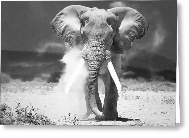 Gray Muzzle Greeting Cards - Old Elephant At Amboseli National Park Kenya Greeting Card by Konstantin Kalishko