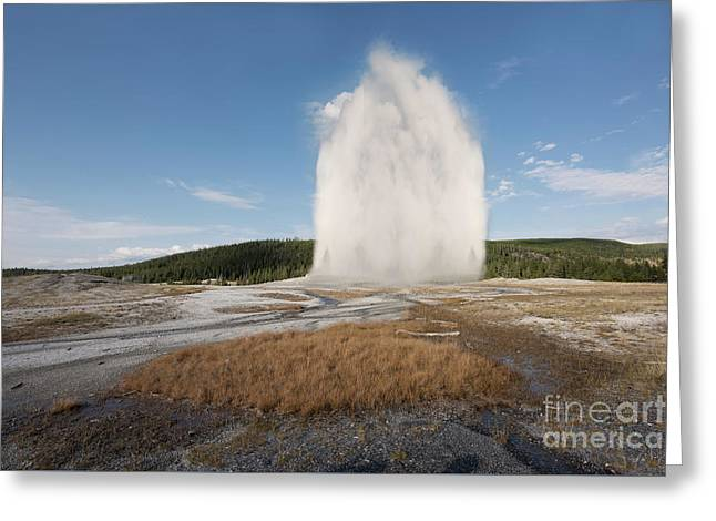 Old Faithful Greeting Card by Juli Scalzi