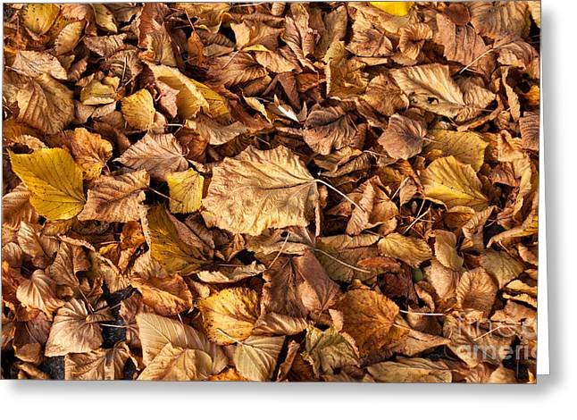 Old Fallen Tilia Leaves Autumn Greeting Card by Arletta Cwalina