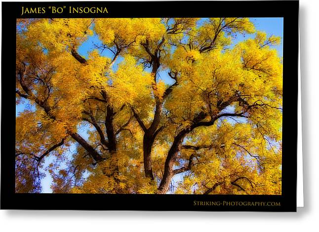 Colorado Greeting Cards - Old Giant  Autumn Cottonwood Orton Greeting Card by James BO  Insogna