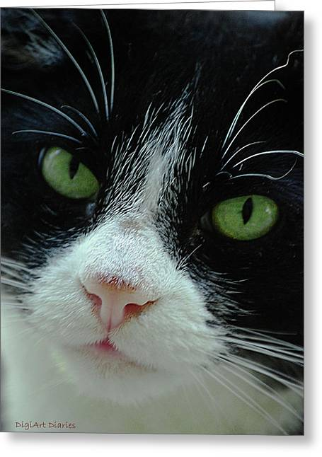 Pink Nose Greeting Cards - Old Green Eyes Greeting Card by DigiArt Diaries by Vicky B Fuller
