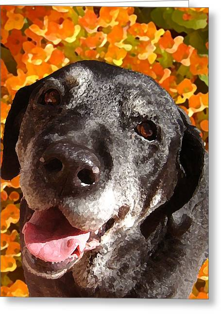Happy Dogs Cute Dogs Greeting Cards - Old Labrador Greeting Card by Amy Vangsgard