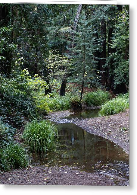 Marin County Greeting Cards - Old Mill Park in Mill Valley 2 Greeting Card by Ben Upham