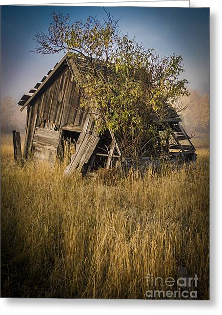 Shack Greeting Cards - Old Miners Shack Greeting Card by Daniel Brunner