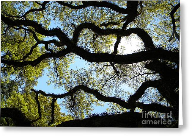 Moss Green Greeting Cards - Old Oak Greeting Card by JoAnn Wheeler