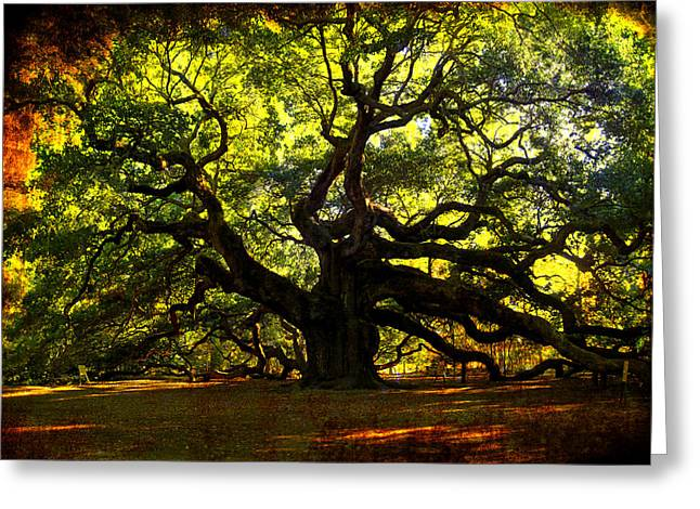 Carolina Photographs Greeting Cards - Old old Angel Oak in Charleston Greeting Card by Susanne Van Hulst