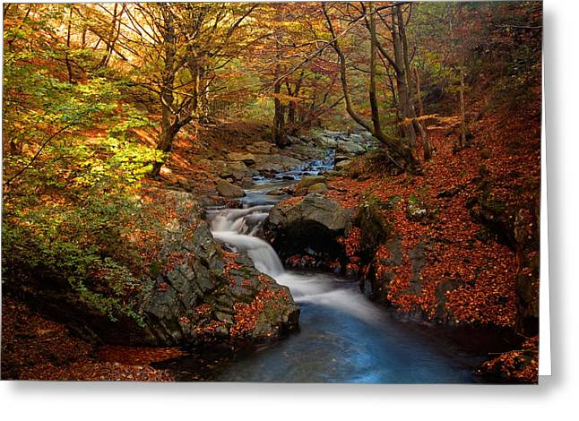 Old River Greeting Card by Evgeni Dinev