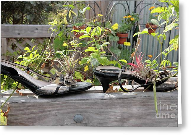 Open Toe Shoes Greeting Cards - Old Shoe Planters at a Botanical Garden Greeting Card by William Kuta