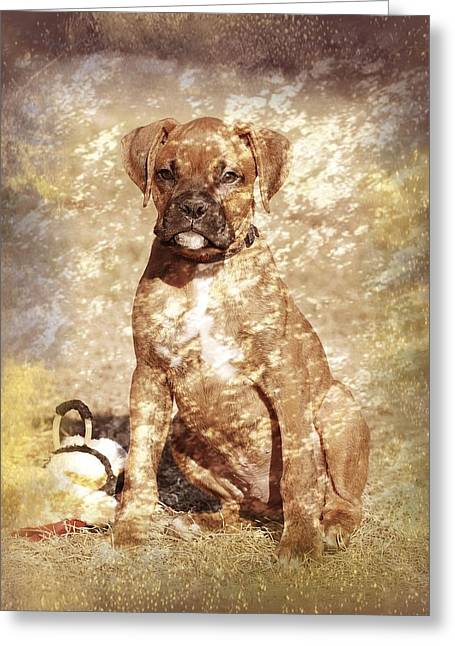Puppy Digital Greeting Cards - Old Time Boxer Portrait Greeting Card by Angie Tirado