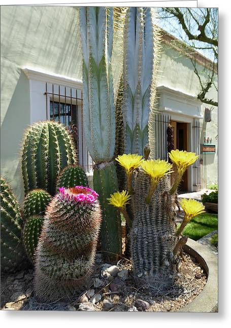 Old Town Scottsdale Color Greeting Card by Gordon Beck