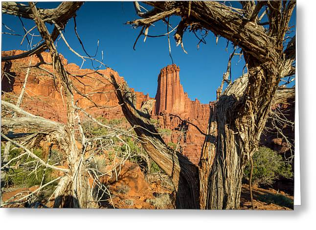Hiking Greeting Cards - Old Trees at Fisher Towers Greeting Card by Michael J Bauer