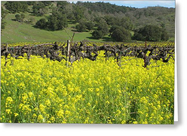 Napa Valley Vineyard Greeting Cards - Old Vines Greeting Card by Kim Pascu