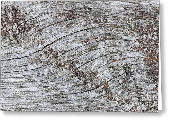 Unpainted Greeting Cards - Old weathered wood abstract Greeting Card by Elena Elisseeva