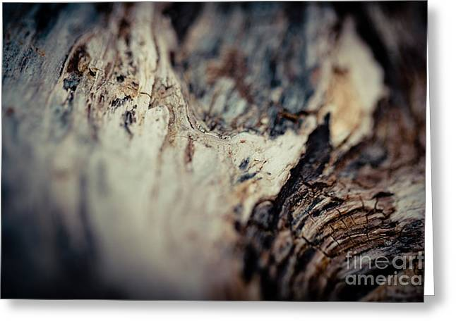 Wood Plank Flooring Greeting Cards - Old Wood Abstract Vintage texture Fotografika Greeting Card by Raimond Klavins