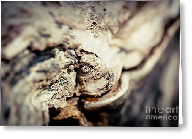 Wood Plank Flooring Greeting Cards - Old Wood Abstract Vintage texture Fotografika.lv Greeting Card by Raimond Klavins
