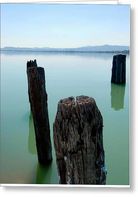 Old Wooden Boat Piles Greeting Card by Dorothy Berry-Lound