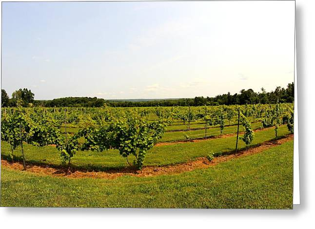 Vines Greeting Cards - Old York Winery Greeting Card by Brian Manfra