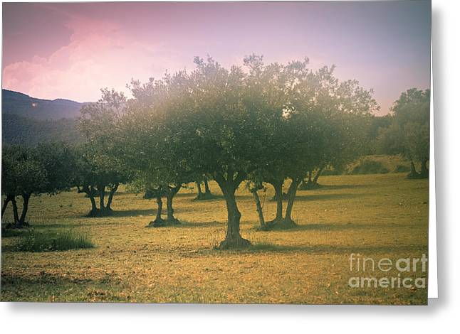 Fruit Tree Art Greeting Cards - Olive grove under fog Greeting Card by Marc SOLERMARCE