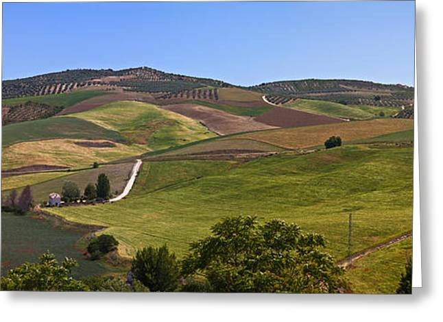 Olive Grove Greeting Cards - Olive Groves, Malaga Province Greeting Card by Panoramic Images