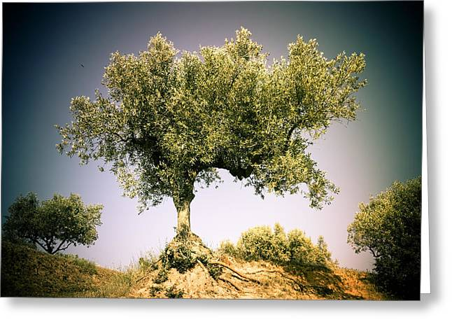 Fruit Tree Art Greeting Cards - Olive tree 3 Greeting Card by Marc SOLERMARCE