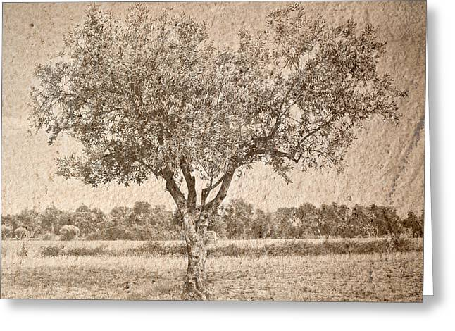 Fruit Tree Art Greeting Cards - Olive tree in sepia Greeting Card by Marc SOLERMARCE