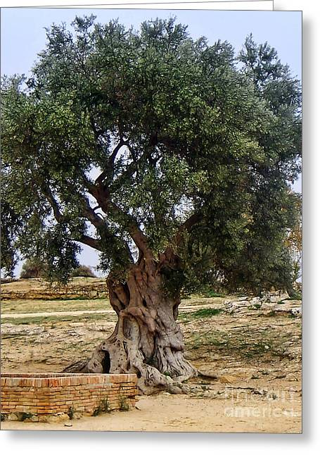 Olive Tree Sicily Greeting Card by Lutz Baar