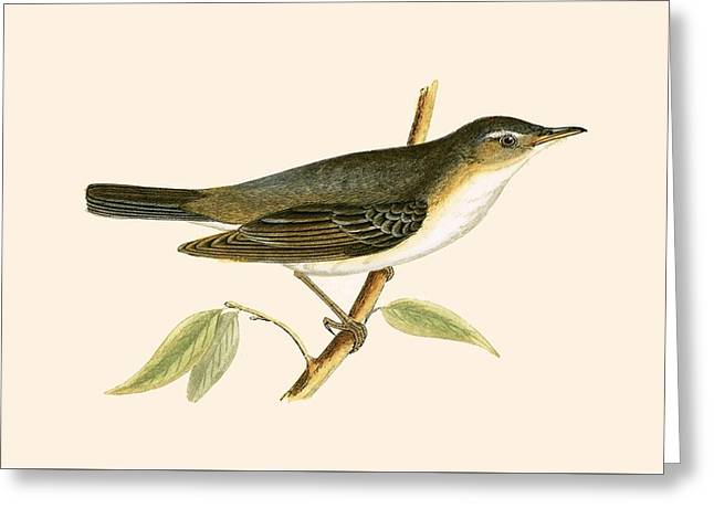 Olive Tree Warbler Greeting Card by English School