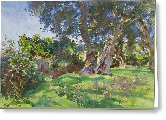 Olive Trees, Corfu Greeting Card by John Singer Sargent