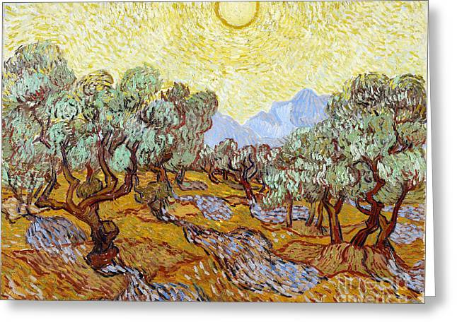 Vintage Painter Greeting Cards - Olive Trees with yellow sky and sun Greeting Card by Van Gogh