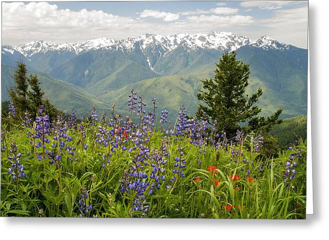 Olympic Mountain Wildflowers Greeting Card by Brian Harig