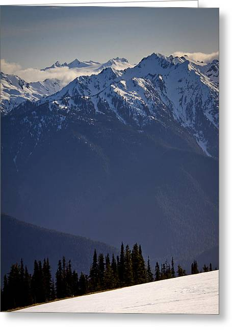 Olympic Mountains Greeting Cards - Olympic National Park Greeting Card by Albert Seger