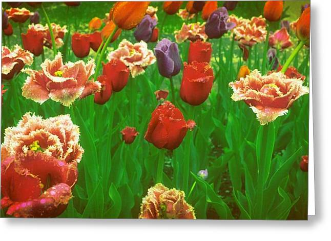 Lacy Floral Greeting Cards - On a Bed of Green Greeting Card by Michelle Calkins