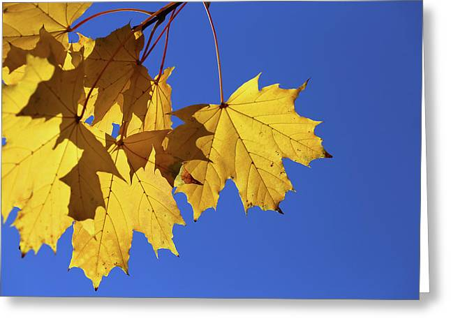 On A Fall Day 1 Greeting Card by Mary Bedy