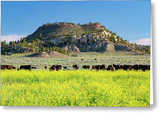 On A Field Of Yellow Greeting Card by Todd Klassy