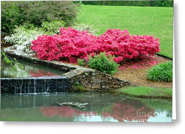 Arkansas Greeting Cards - On A June Day Greeting Card by Kathy Bucari