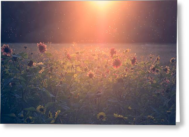Pollen Greeting Cards - On a warm summers evening Greeting Card by Chris Fletcher