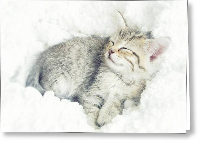 Cat Prints Photographs Greeting Cards - On Cloud Nine Greeting Card by Amy Tyler